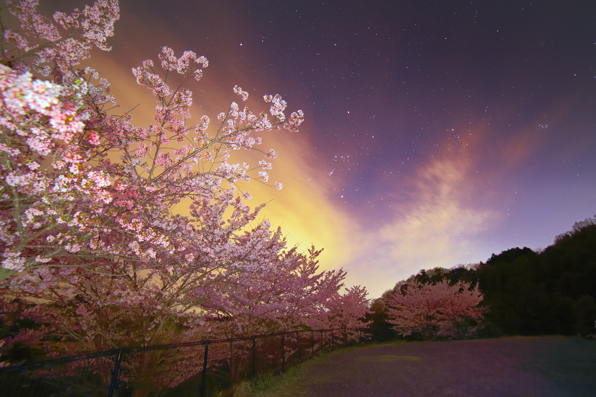 花明りに沈むオリオン